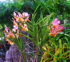 #caribbean #flora #islands #blooms #flowers