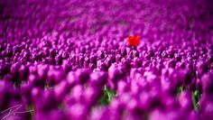 """""""Standing Out In The Crowd"""" by Ian Ludwig, via 500px."""