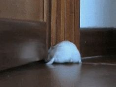 20 Reasons Hamsters Should Be Your New Heroes Animals For Kids, Animals And Pets, Baby Animals, Funny Animals, Cute Animals, Funny Animal Videos, Funny Animal Pictures, Cute Pictures, Funny Rats