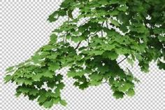 texture leaves alpha masked tree branch side