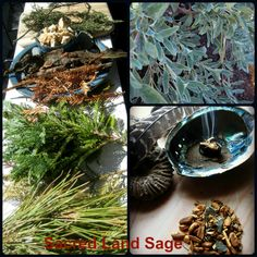 Seasonal Plant Spirits from Sacred Lands.  We harvest California's sacred sages and evergreens. We grow California's organic White, Black, and Bee sages for your sacred ceremony.