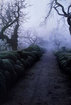 Frosted cloud hedge avenue