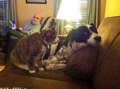 These Hilarious Animals Really Don't Understand What Personal Space Is Funny Cat Videos, Funny Animal Pictures, Funny Cats, Funny Animals, Cute Animals, Vintage Funny Quotes, Pet Food Storage, Poor Dog, Pet News