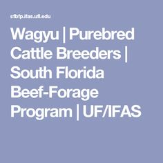 Wagyu   Purebred Cattle Breeders   South Florida Beef-Forage Program   UF/IFAS