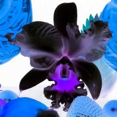 Marc Quinn. (Untitled) Series: Small Inverse Flowers -2012 Archival Pigment