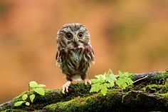 A baby owl - wallpaper (3888x2592) - animaux - Biographies dartistes et de peintres célèbres, analyses doeuvres, mouvements artistiques pour votre brevet de lhistoire de lart. Peintures et photographies de Mik-Art
