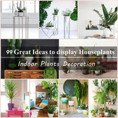 The role of houseplants for healthy indoor climate is indisputable. Potted plants provide a lively atmosphere and can transform your home into a green oasis. This is a well-known fact. What do you think about yourself? Do you also have beautiful houseplants at home? And if not, why? We want to put you on the idea that houseplants make the living space more comfortable, breathable and luxurious.