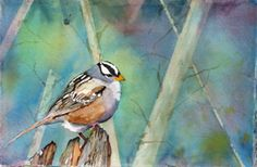 white-crowned sparrow from watercolorist  Rita Sklar