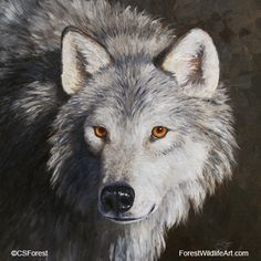 Gray wolf portrait - Original Oil Painting by wildlife artist Crista Forest - Fine Art Prints starting at just $25. Notecards also available. Get them here:  http://fineartamerica.com/profiles/crista-forest.html