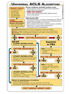 Sorry I haven't been on for a few days. Anyway, here's a quick reference you can print out of the 2012 AHA ACLS algorithm. for anyone interested in the ED or critical care (like me) =) Nursing Cheat Sheet, Nursing Tips, Nursing Notes, Nursing Programs, Cardiac Nursing, Nursing Mnemonics, Nursing Math, Nicu Nursing, Nursing Degree