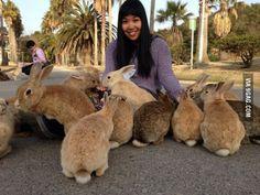 "Ōkunoshima, Japan ""Bunny Island"""