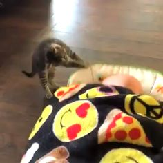Cats cute funny kittens pets ideas for 2019 Cute Funny Animals, Cute Baby Animals, Funny Cute, Animals And Pets, Cute Cats, Hilarious, Cute Animal Videos, Funny Animal Pictures, I Love Cats