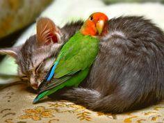 Спящие зверушки, от вида которых у вас растает сердце • НОВОСТИ В ФОТОГРАФИЯХ