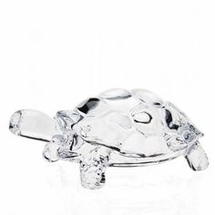 crystal turtle Case of 6