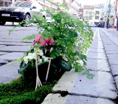 brike lane garden / guerilla gardens (form of art ;)