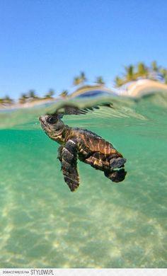 Cute Little Sea Turtle | Love Cute Animals  #turtles