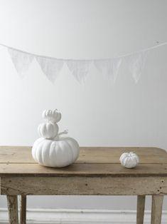 white pumpkins fall halloween autumn