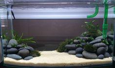 Image result for beach pebbles aquarium,