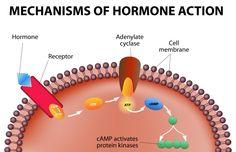 Addressing Hormonal Imbalance in Women