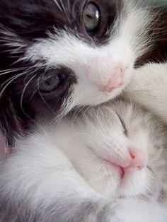 Sweet kittens