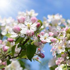 Frühling 371