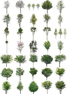 ハナミズキサルスベリ樹木素材無料