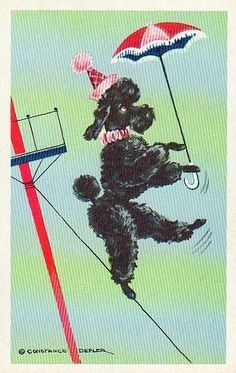 Poodle on tightrope