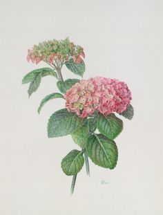 Gallery.ru / Фото #1 - ботаническая акварель 2 - ninmix