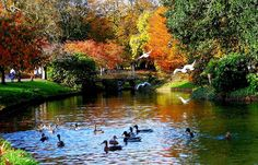 Autumn in Sefton Park. One of Liverpools beautiful parks.