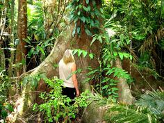 Australia a country of endless possibilities - Daintree rainforest