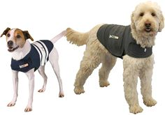This Thundershirt is something I need for my dog Ringo who is afraid of thunder. How Thundershirt Works Thundershirt's gentle, constant pressure is a terrific solution for many types of dog anxiety, fearfulness, barking and more. Thunder Shirt For Dogs, Dog Anxiety, Anxiety Cure, Health Anxiety, Anxiety Remedies, Anxiety Tips, Anxiety Help, Types Of Dogs, Old Dogs