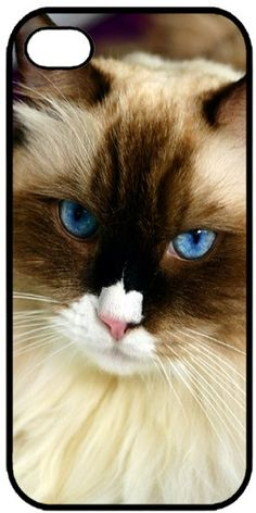 The ragdoll cat is a large breed of cat, best known for its easygoing and mellow nature. Wonderful Caring for a Ragdoll Cat Ideas. I Love Cats, Crazy Cats, Cool Cats, Cute Kittens, Cats And Kittens, Ragdoll Cats, Amor Animal, Here Kitty Kitty, Domestic Cat