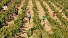 Bodegas Ostatu: editora de vinos. #RiojaAlavesa http://riojaalavesa.blog.euskadi.net/bodegas-ostatu-editora-de-vinos Ostatu upeltegiak: ardo editore. http://arabaerrioxa.blog.euskadi.net/ostatu-upeltegiak-ardo-editore