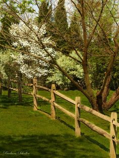 Spring Trees | Spring Trees and Fencing - Essentials Cafe