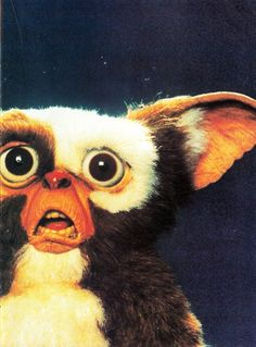 for about 3 years straight growing up i was convinced i would one day own gizmo...