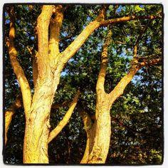 Opgroeiend bos