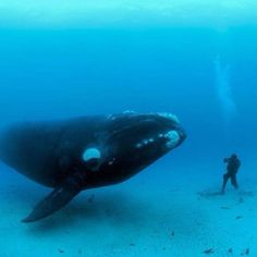 Ultimate whale watching.