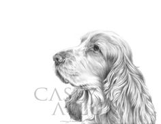 Pencil drawing of a Cocker Spaniel by Casey Allum #detail #art #pencil #pencildrawing #cockerspaniel