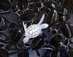 leucistic turtle