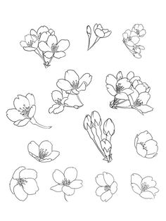 cherry blossom line Drawing - Bing images Tattoo Sketches, Drawing Sketches, Art Drawings, Line Drawing, Painting & Drawing, Line Art, Doodles, Flower Sketches, Floral Drawing