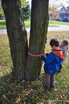 Use yarn to measure the tree trunks