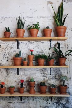 Succulents and cacti on the wall.