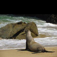 Cabo San Lucas seals