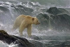 Great Bear Rainforest agreement creates 'a gift to the world' An area bigger than Vancouver Island is now under complete protection from industrial logging. ~CBC Salmon Watch – Spirit Bear 2005 Robert Bateman Feb It is a thrilling day … Continued Spirit Bear, Number Art, Best Build, Batman, Wildlife Art, Limited Edition Prints, Beautiful Artwork, Polar Bear, Art Gallery