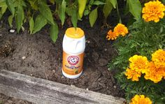 Baking Soda in your Garden: helpful hints including: sprinkle paths and dirt twice a year and weeds will not grow.