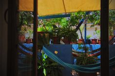 #green, #hammocks, #cadiz