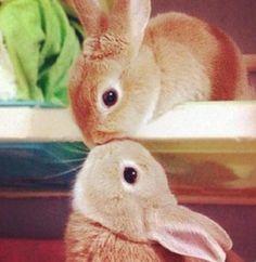 How cute! #bunny #cute #Easter