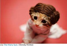 Kitty Leia
