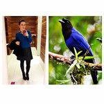 De hoje! Gralha-azul, por Frederico Swarofsky. #lookdodia #BichoDoDia #ootd #moda #fashion #blogdemoda
