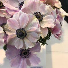 Day ☝️ at the IFTF with view of the beautiful  Mistral Anemone's .The corms produced in 🇮🇹 by our friends at Biancheri Anemoni and corms available via @italian_ranunculus cut flowers available by special advanced placed orders via Florabundance #anemone#flowersfromallovertheworld #passionateaboutflowers #IFTF